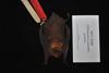 http://mczbase.mcz.harvard.edu/specimen_images/mammalogy/large/16468_Pteronotus_parnellii_pusillus_d.jpg