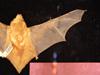 http://mczbase.mcz.harvard.edu/specimen_images/mammalogy/large/1686_Lasiurus_borealis_borealis_d.jpg