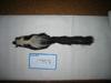 http://mczbase.mcz.harvard.edu/specimen_images/mammalogy/large/17958_Mephitis_mephitis_milleri_d.jpg