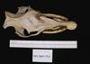 http://mczbase.mcz.harvard.edu/specimen_images/mammalogy/large/1912_Babyrousa_babyrousa_hd.jpg