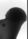http://mczbase.mcz.harvard.edu/specimen_images/mammalogy/large/19157_Elephas_maximus_femur_x2.jpg