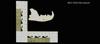 http://mczbase.mcz.harvard.edu/specimen_images/mammalogy/large/19224_Felis_colocolo_ml.jpg