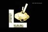 http://mczbase.mcz.harvard.edu/specimen_images/mammalogy/large/19501_Felis_colocolo_hd.jpg