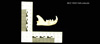 http://mczbase.mcz.harvard.edu/specimen_images/mammalogy/large/19501_Felis_colocolo_ml.jpg
