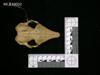 http://mczbase.mcz.harvard.edu/specimen_images/mammalogy/large/19502_Chaetophractus_villosus_hd.jpg