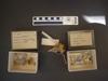 http://mczbase.mcz.harvard.edu/specimen_images/mammalogy/large/19589_Zaedyus_pichiy_hv.jpg