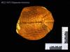 http://mczbase.mcz.harvard.edu/specimen_images/mammalogy/large/1975_Tolypeutes_tricinctus_l.jpg