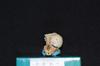 http://mczbase.mcz.harvard.edu/specimen_images/mammalogy/large/19804_Aotus_trivirgatus_griseimembra_hf.jpg