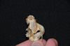 http://mczbase.mcz.harvard.edu/specimen_images/mammalogy/large/19804_Aotus_trivirgatus_griseimembra_hv2.jpg