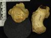http://mczbase.mcz.harvard.edu/specimen_images/mammalogy/large/20039_Gorilla_gorilla_gorilla_calcaneus.jpg