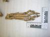 http://mczbase.mcz.harvard.edu/specimen_images/mammalogy/large/20968_Crocuta_crocuta_crouta_foot2_d.jpg