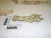 http://mczbase.mcz.harvard.edu/specimen_images/mammalogy/large/20968_Crocuta_crocuta_crouta_foot_l.jpg