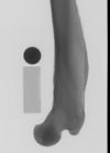 http://mczbase.mcz.harvard.edu/specimen_images/mammalogy/large/20969_Myrmecophaga_tridactyla_femur_x.jpg