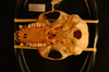 http://mczbase.mcz.harvard.edu/specimen_images/mammalogy/large/21147_Colobus_polykomos_caudatus_hv.jpg