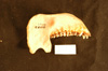 http://mczbase.mcz.harvard.edu/specimen_images/mammalogy/large/21147_Colobus_polykomos_caudatus_ml.jpg