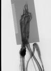 http://mczbase.mcz.harvard.edu/specimen_images/mammalogy/large/22256_Tupaia_splendidula_hldx.jpg