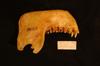 http://mczbase.mcz.harvard.edu/specimen_images/mammalogy/large/22625_Colobus_polykomos_palliatus_ml.jpg
