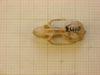 http://mczbase.mcz.harvard.edu/specimen_images/mammalogy/large/22640_Otomys_typus_uzungwensis_hd.jpg