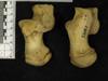 http://mczbase.mcz.harvard.edu/specimen_images/mammalogy/large/23161_Gorilla_gorilla_gorilla_calcaneus.jpg