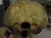 http://mczbase.mcz.harvard.edu/specimen_images/mammalogy/large/23161_Gorilla_gorilla_gorilla_hp.jpg