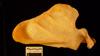 http://mczbase.mcz.harvard.edu/specimen_images/mammalogy/large/23182_Gorilla_gorilla_beringei_scap-ant.jpg