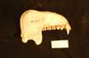 http://mczbase.mcz.harvard.edu/specimen_images/mammalogy/large/23190_Colobus_polykomos_satanas_ml.jpg