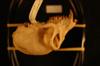 http://mczbase.mcz.harvard.edu/specimen_images/mammalogy/large/24080_colobus_badius_badius_hl.jpg