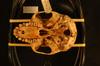 http://mczbase.mcz.harvard.edu/specimen_images/mammalogy/large/25007_Colobus_badius_ellioti_hv.jpg