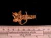 http://mczbase.mcz.harvard.edu/specimen_images/mammalogy/large/26336_Cryptomys_hottentotus_whytei_hv.jpg