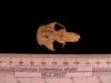 http://mczbase.mcz.harvard.edu/specimen_images/mammalogy/large/26337_Cryptomys_hottentotus_whytei_hd.jpg