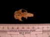 http://mczbase.mcz.harvard.edu/specimen_images/mammalogy/large/26340_Cryptomys_hottentotus_whytei_hd.jpg