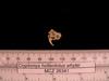 http://mczbase.mcz.harvard.edu/specimen_images/mammalogy/large/26341_Cryptomys_hottentotus_whytei_hl.jpg