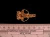 http://mczbase.mcz.harvard.edu/specimen_images/mammalogy/large/26342_Cryptomys_hottentotus_whytei_hv.jpg