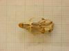 http://mczbase.mcz.harvard.edu/specimen_images/mammalogy/large/26353_Otomys_lacustris_hv.jpg