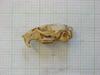 http://mczbase.mcz.harvard.edu/specimen_images/mammalogy/large/26354_Otomys_lacustris_hl.jpg