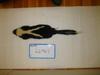 http://mczbase.mcz.harvard.edu/specimen_images/mammalogy/large/26461_Mephitis_mephitis_nigra_d.jpg
