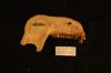 http://mczbase.mcz.harvard.edu/specimen_images/mammalogy/large/26479_Presbytis_phayrei_ml.jpg
