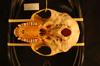 http://mczbase.mcz.harvard.edu/specimen_images/mammalogy/large/26552_Colobus_badius_gordonorum_hv.jpg