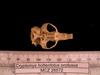 http://mczbase.mcz.harvard.edu/specimen_images/mammalogy/large/26572_Cryptomys_hottentotus_whytei_hv.jpg