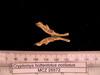 http://mczbase.mcz.harvard.edu/specimen_images/mammalogy/large/26572_Cryptomys_hottentotus_whytei_md.jpg