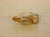 http://mczbase.mcz.harvard.edu/specimen_images/mammalogy/large/26640_Otomys_typus_uzungwensis_hv.jpg