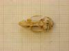 http://mczbase.mcz.harvard.edu/specimen_images/mammalogy/large/26641_Otomys_typus_uzungwensis_hd.jpg