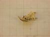 http://mczbase.mcz.harvard.edu/specimen_images/mammalogy/large/26643_Otomys_typus_uzungwensis_hl2.jpg