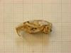 http://mczbase.mcz.harvard.edu/specimen_images/mammalogy/large/26644_Otomys_typus_uzungwensis_hl.jpg