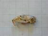 http://mczbase.mcz.harvard.edu/specimen_images/mammalogy/large/26652_Otomys_typus_uzungwensis_hl.jpg
