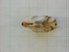 http://mczbase.mcz.harvard.edu/specimen_images/mammalogy/large/26656_Otomys_typus_uzungwensis_hv.jpg