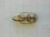 http://mczbase.mcz.harvard.edu/specimen_images/mammalogy/large/26664_Otomys_typus_uzungwensis_hd.jpg