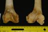http://mczbase.mcz.harvard.edu/specimen_images/mammalogy/large/26849_Pan_troglodytes_femurs_dist.jpg
