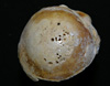 http://mczbase.mcz.harvard.edu/specimen_images/mammalogy/large/26849_Pan_troglodytes_humerus_head_rt_3.jpg