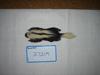http://mczbase.mcz.harvard.edu/specimen_images/mammalogy/large/27219_Conepatus_semistriatus_semistriatus_d.jpg